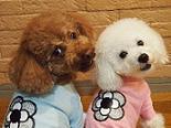 """假如是""""shieahapi""""的话,有能在和宠物一起生活的房间!! - 『シェアハピ』ならペットと一緒に暮らせる部屋もあります!!"""